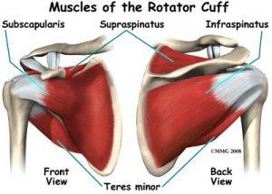shoulder-article