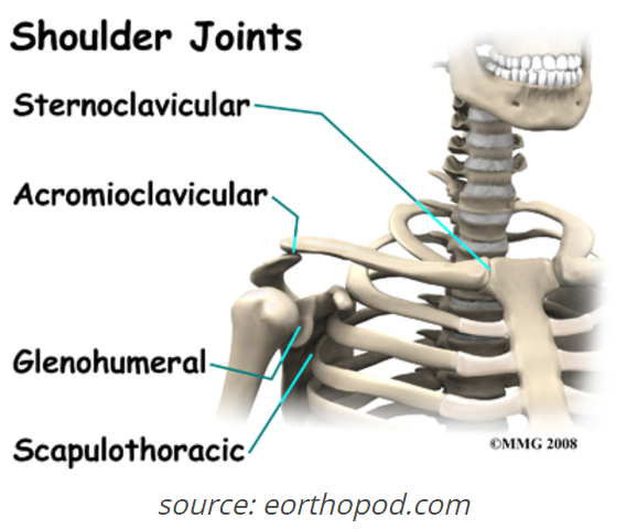 acromioclavicular joint Archives - Kinetic Edge Physical Therapy