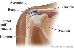 Shoulder Structure